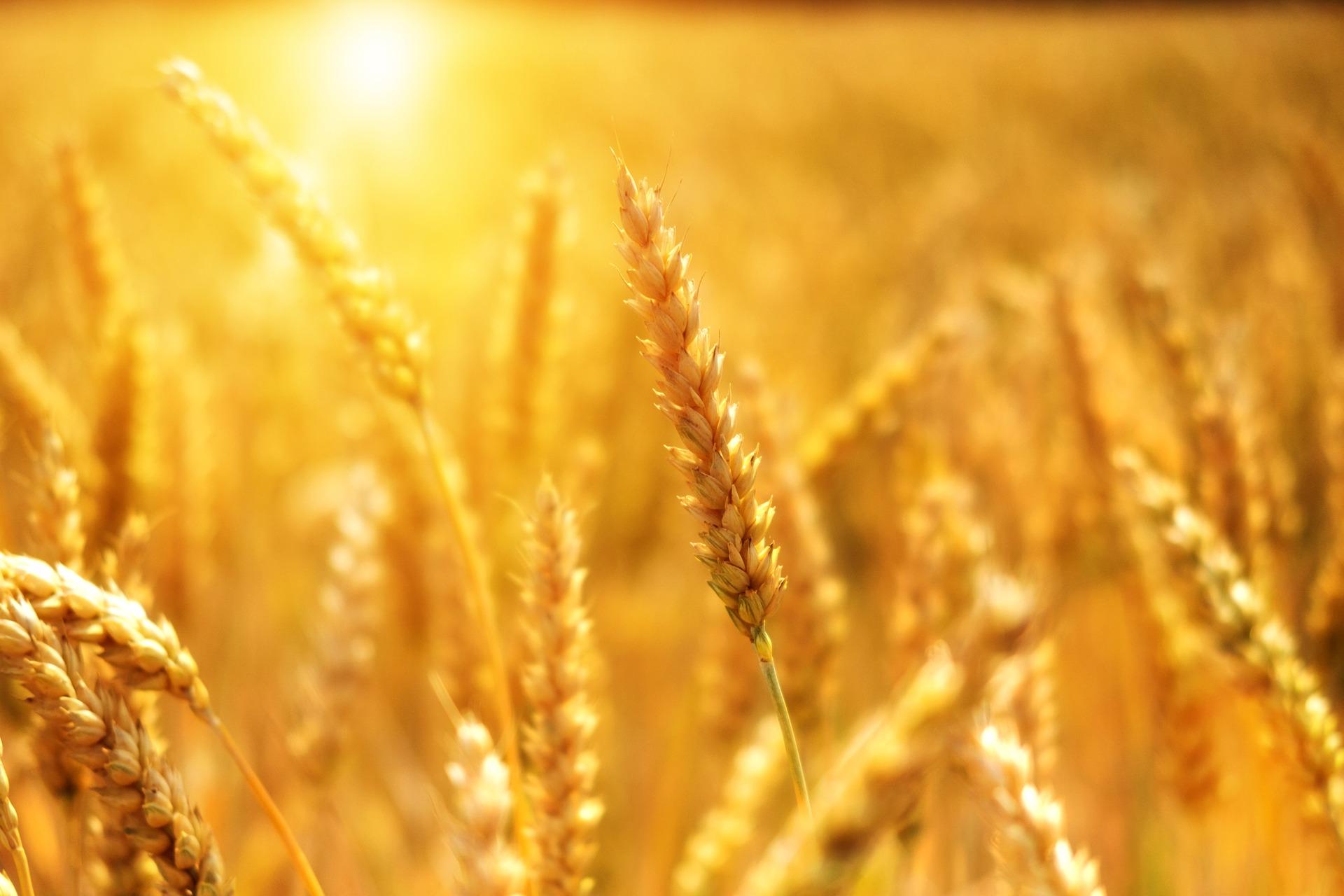 Abendvortrag Landwirtschaft